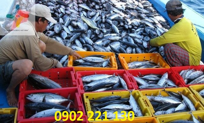 Chế biến hải sản sử dụng sóng nhựa (rổ nhựa) Hòa An