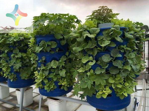 Rau trồng trong thùng phuy tái chế xanh tốt