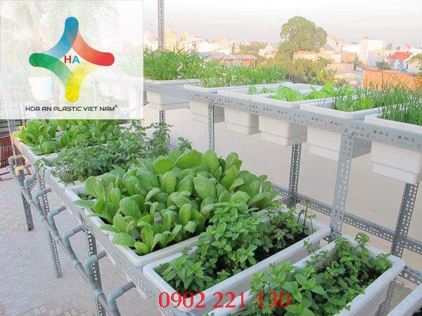 Khay trồng rau thông minh được ưa chuộng sử dụng