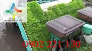 Khay gieo mạ 5 chấu bền đẹp, tiện lợi được sử dụng với máy cấy công nghiệp